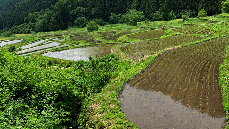 福島の棚田